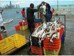La nueva herramienta también ayudará a disminuir la pesca incidental de tiburones y la pesca ilegal.