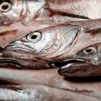La incertidumbre de los datos a la hora de recuperar la merluza común
