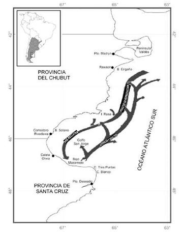 Argentine Red Shrimp Off Shore Centro Desarrollo Y Pesca Sustentable