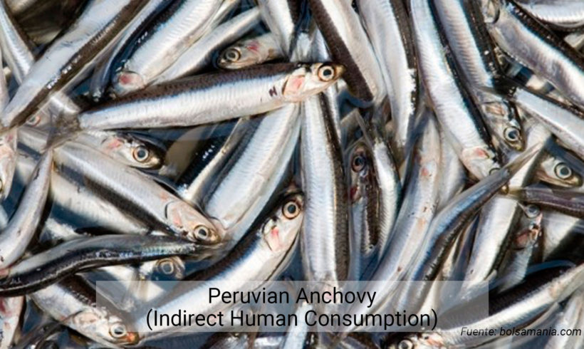 Peruvian Anchovy (Indirect Human Consumption)