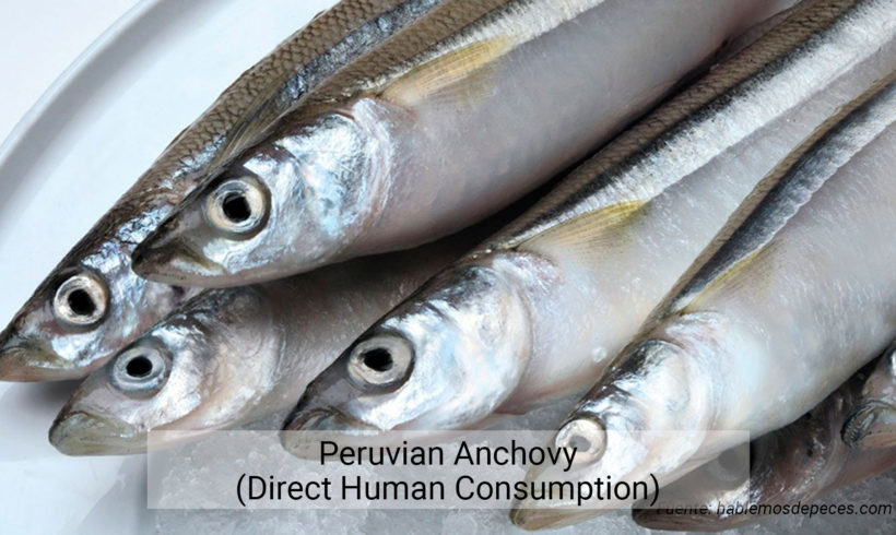 Peruvian Anchovy (Direct Human Consumption)