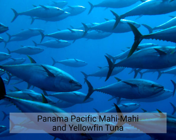 Panama Pacific Mahi-Mahi and Yellowfin Tuna