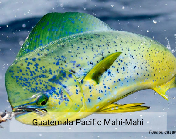 Guatemala Pacific Mahi-Mahi