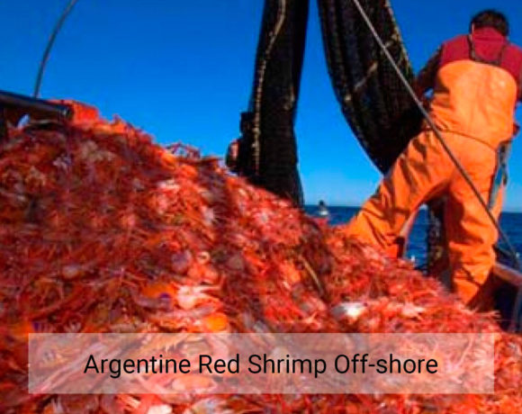 Argentine red shrimp off-shore