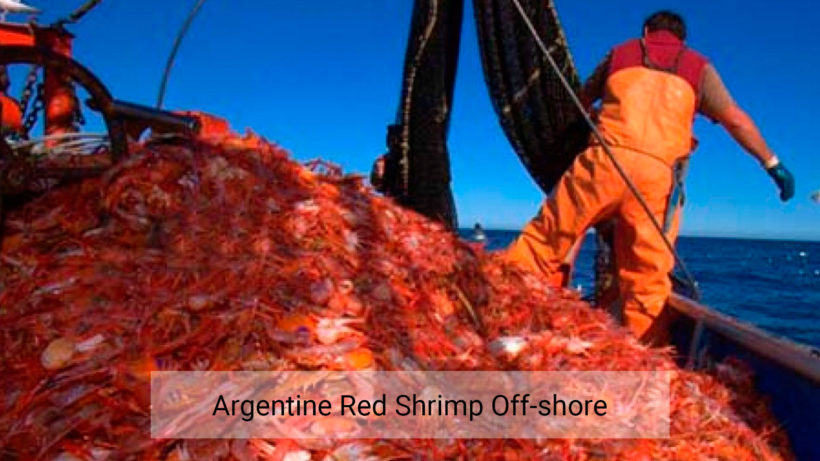 Argentine red shrimp off-shore