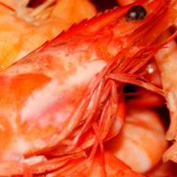 Pesquería de langostino: las técnicas de selectividad requieren el consenso de los pescadores