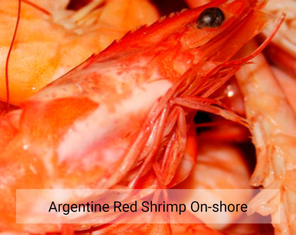 Argentine red shrimp on-shore
