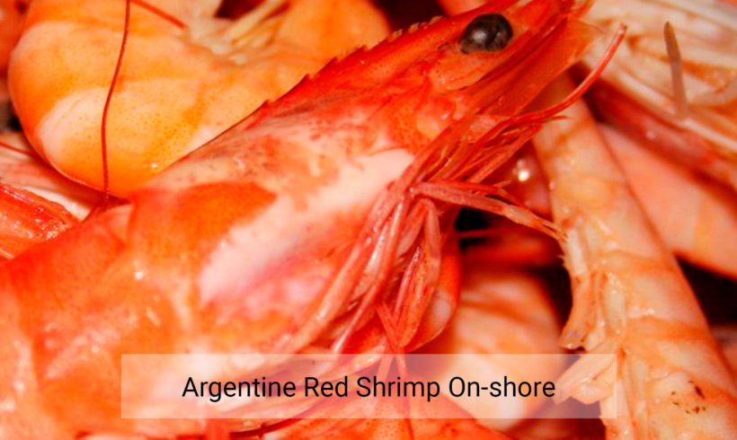 Argentine red shrimp on-shore