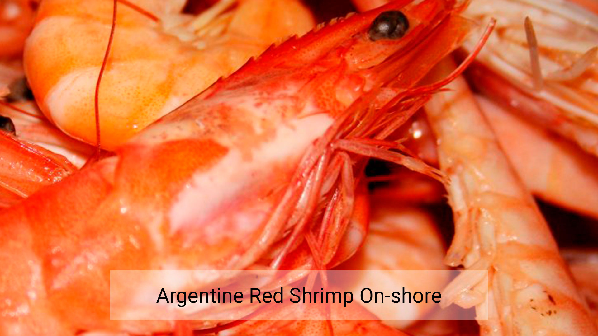 Argentine red shrimp on-shore – Centro Desarrollo y Pesca Sustentable