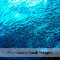PRIMERA EVALUACIÓN DE STOCK: Pequeños pelágicos de Panamá en óptimo estado