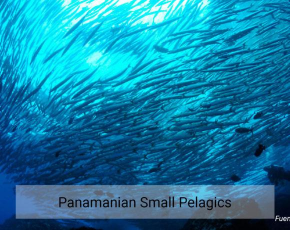 Panamanian Small Pelagics