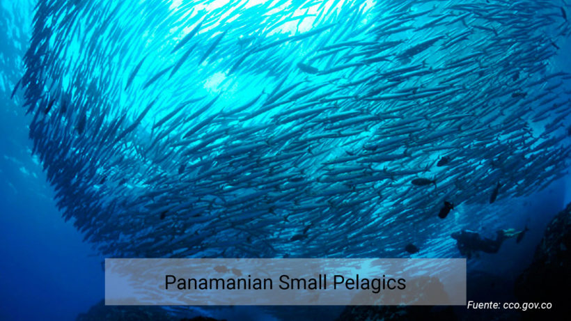 Panamanian Small Pelagics