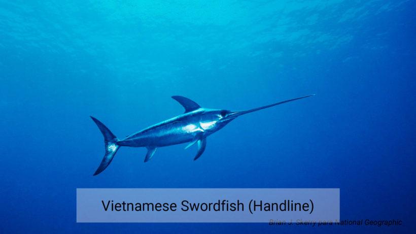 Vietnam swordfish