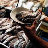 Combatir enérgicamente la pesca ilegal de merluza beneficia a todos