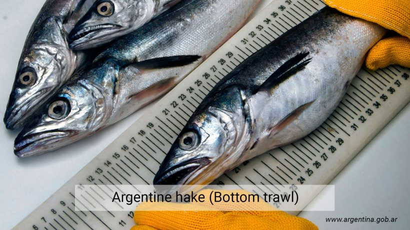 Argentine hake (Bottom trawl)