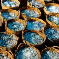 La pesquería de anchoveta peruana está casi lista para comenzar la evaluación del MSC