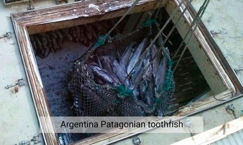 Argentina patagonian toothfish
