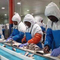 CERTIFICACIONES: La pesquería de merluza de Namibia obtiene el MSC