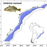 CEDEPESCA DO BRASIL: Novo PROME no Sul para a pescaria de arrasto da castanha